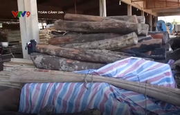 Phát hiện khối lượng gỗ lớn nghi từ hiện trường vụ phá rừng ở An Lão