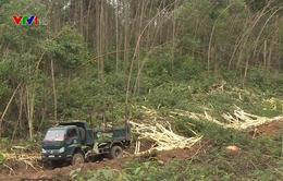 Hỗ trợ tiêu thụ gỗ rừng gãy đổ do bão số 10