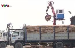 Người dân Hà Tĩnh gặp khó khăn trong tiêu thu gỗ sau bão