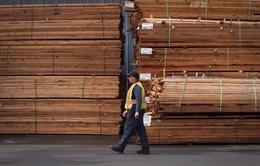 Canada đưa vấn đề tranh chấp thương mại về gỗ với Mỹ lên WTO phân xử