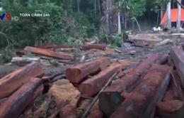Phát hiện vụ phá rừng quy mô lớn, có tổ chức ở Đăk Lăk
