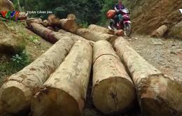 Kỷ luật nhiều cán bộ Lào Cai, Yên Bái để rừng phòng hộ bị tàn phá