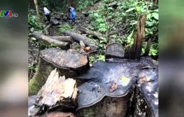 Khởi tố nguyên Trưởng công xã do phá rừng