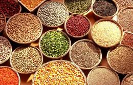 Giá lương thực thế giới nhích lên trong tháng 2/2017