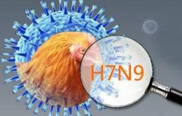 Mức độ nguy hiểm đáng sợ của virus H7N9
