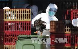 Dịch cúm gia cầm H7N9 tại Trung Quốc có xu hướng giảm