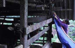 Người dân vùng cao Hà Giang chống rét