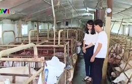 Hà Nam: Hỗ trợ chưa hiệu quả, người nuôi lợn vẫn loay hoay