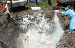 Nghệ An tiêu hủy gần 1.000 con gia cầm phòng lây lan cúm H5N1