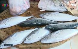 Thị trường hải sản Phú Yên sôi động trở lại sau Tết
