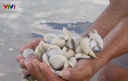 Kiên Giang: Hải sản chết hàng loạt, ngư dân trắng tay