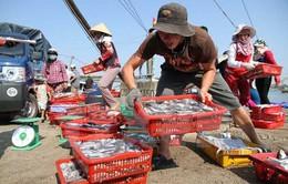 Tiếp tục dừng khai thác hải sản tầng đáy tại 4 tỉnh miền Trung