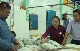 Quảng Bình: Áp giá bồi thường hải sản tồn kho vụ Formosa