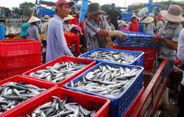 EU cảnh báo vi phạm khai thác hải sản