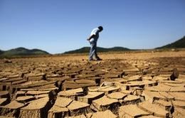 Brazil hứng chịu đợt hạn tồi tệ nhất trong 100 năm