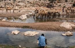 Hạn hán kinh hoàng ở Somalia, ít nhất 110 người thiệt mạng