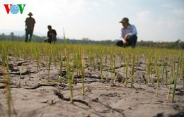 Hàng nghìn hồ sơ hỗ trợ hạn mặn sai sót ở Kiên Giang