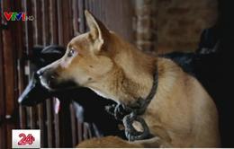 Cơ bản chấm dứt tình trạng giết mổ chó mèo tại Thái Lan