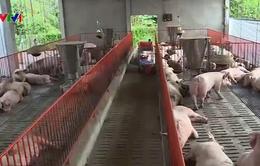 Đồng Nai thu hẹp chăn nuôi do thua lỗ