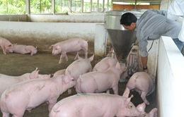 Doanh nghiệp tham gia giải cứu ngành chăn nuôi heo tại Long An