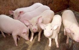 Việt Nam sẽ hết thừa lợn từ 2018