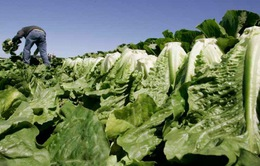 Cảnh báo bùng phát dịch do nhiễm khuẩn E.coli ở Canada