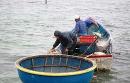 EC ban hành quy định chấm dứt đánh bắt hải sản bất hợp pháp