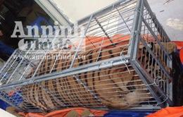Thanh Hóa: Tạm giữ đối tượng vận chuyển cá thể hổ trái phép