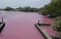 Hồ nước bất ngờ đổi màu tím, bốc mùi hôi thối