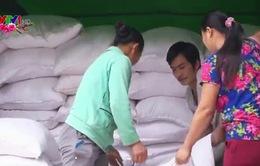 Xuất cấp 1.700 tấn gạo cho Quảng Bình, Sóc Trăng dịp Tết