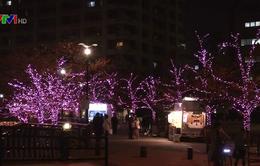 Thắp sáng phố hoa anh đào Nhật Bản bằng năng lượng tái chế từ dầu ăn