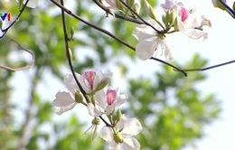 Chủ tịch Quốc hội gợi ý Điện Biên phát triển du lịch từ hoa ban