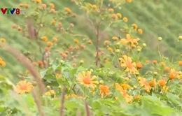 Khai mạc Lễ hội hoa dã quỳ núi lửa Chư Đăng Ya