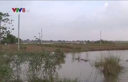 Thiệt hại hoa Tết do mưa lũ ở Thừa Thiên - Huế