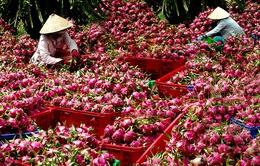 Nhật Bản xem xét nới lỏng quy định nhập khẩu hoa quả tươi Việt Nam