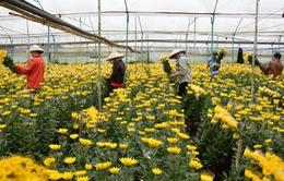 Lâm Đồng có vùng nông nghiệp công nghệ cao đầu tiên