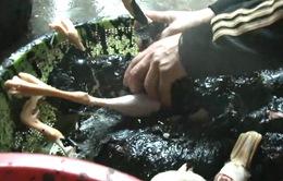 Bình Thuận: Bắt quả tang cơ sở giết mổ gia cầm sử dụng chất độc hại
