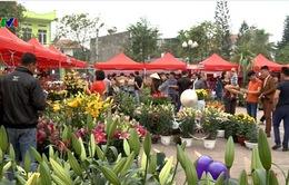 Rộn ràng lễ hội Hoa xuân Hoành Bồ, Quảng Ninh