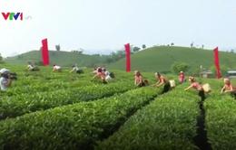 Tưng bừng hội trà Mộc Châu 2017