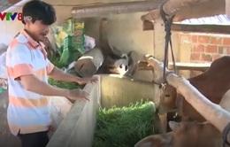 Phú Yên: Tăng cường cấp vốn cho người nghèo tái sản xuất sau lũ