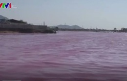 Hồ nước chuyển màu tím ngắt, cá chết hàng loạt