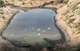 TT-Huế: Hàng loạt hồ nuôi tôm thẻ chân trắng xả thải ra môi trường