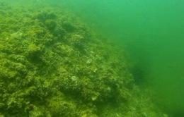 Tiếp tục ngưng khai thác hải sản tầng đáy 4 tỉnh bị ảnh hưởng sự cố Formosa