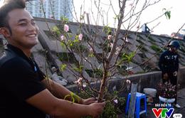 Hà Nội: Sắc hoa đào nhẹ nhàng xuống phố