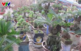 Độc đáo non bộ, bonsai ở các chợ hoa Tết Hà Nội