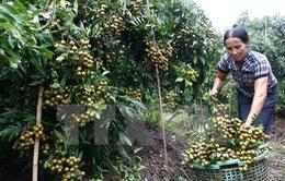 Hưng Yên cần xây dựng nền nông nghiệp đô thị