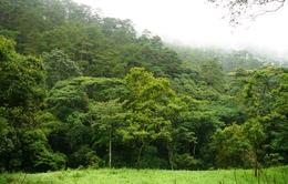 Gần 283.000ha đất lâm nghiệp ở Tây Nguyên đang tranh chấp