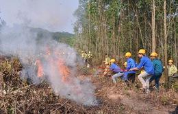 Quảng Bình: Nắng nóng kéo dài, nguy cơ cháy rừng cao