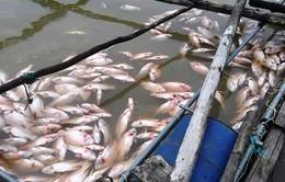Hỗ trợ gần 300 triệu đồng cho hộ nuôi cá lồng bị chết tại thủy điện Plei Krông