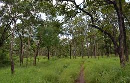 Đăk Nông: Thu hồi gần 2.000ha đất rừng bị lấn chiếm